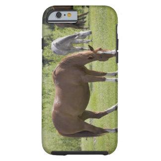 Calgary, Alberta, Canada 2 Tough iPhone 6 Case