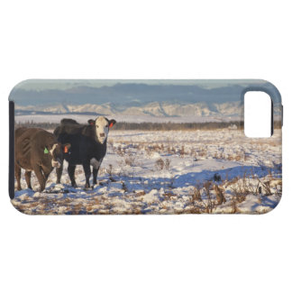 calgary, alberta, canada iPhone 5 case