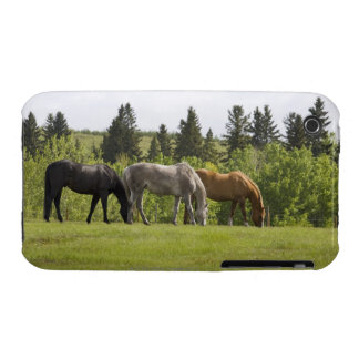 Calgary, Alberta, Canada iPhone 3 Covers