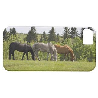Calgary, Alberta, Canada Case For The iPhone 5