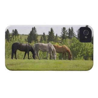 Calgary, Alberta, Canada iPhone 4 Cases