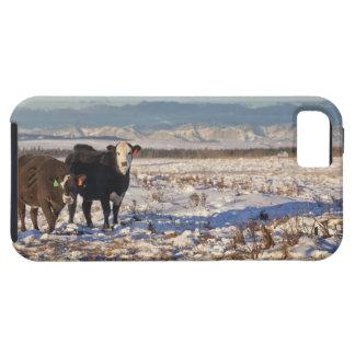 calgary, alberta, canada iPhone 5 cases