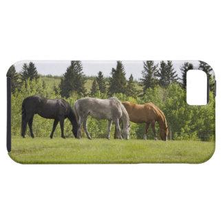 Calgary, Alberta, Canada iPhone 5 Covers