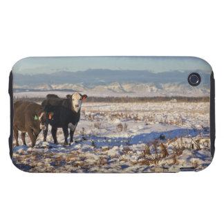calgary, alberta, canada tough iPhone 3 case