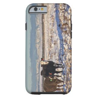 calgary, alberta, canada tough iPhone 6 case