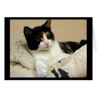 Calico Cat Birthday Wishes Card