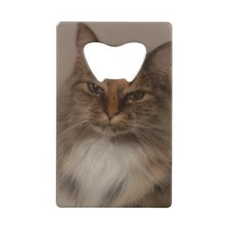 Calico Cat Bottle Opener Credit Card Bottle Opener