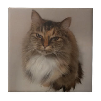 Calico Cat Ceramic Tile
