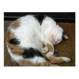 Calico cat curled up on a doormat postcard