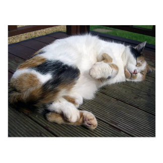 Calico cat curled up on the decking postcard
