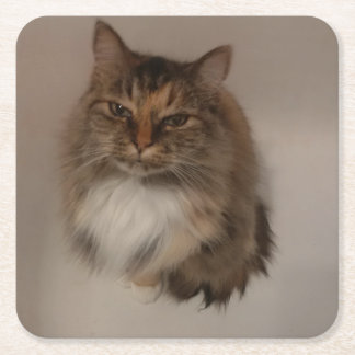 Calico Cat Drink Coaster