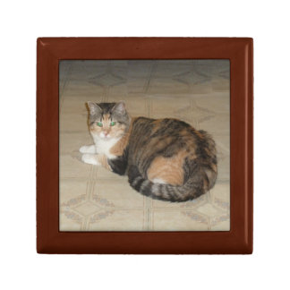 Calico Cat Gift Box