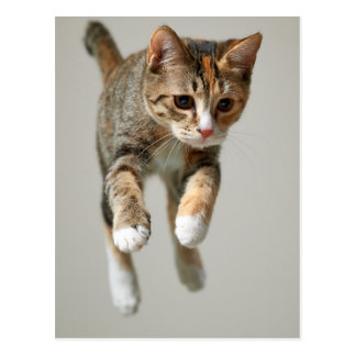 Calico Cat Jumping Postcard