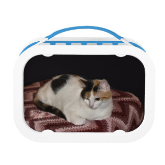Calico Cat Lunch Box