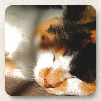 Calico Cat Sunning Coaster