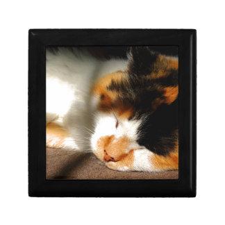 Calico Cat Sunning Gift Box