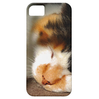 Calico Cat Sunning iPhone 5 Case