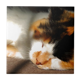 Calico Cat Sunning Tile