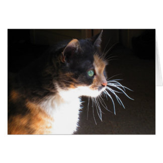 Calico Cat Whiskers Card