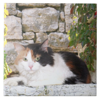 Calico in stone window tile