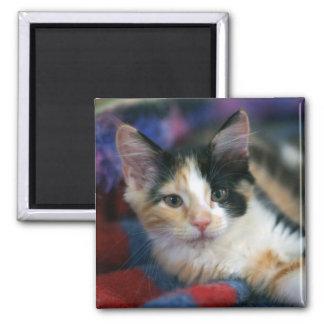 Calico Kitten, Plotting Square Magnet
