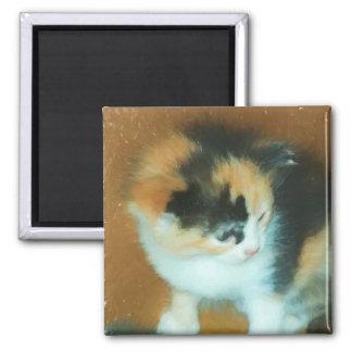 Calico Kitten Refrigerator Magnet