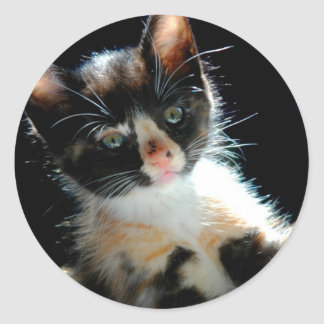 Calico Kitten Sticker
