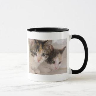 Calico Kittens Mug