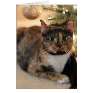 Calico Kitty under Christmas Tree Card