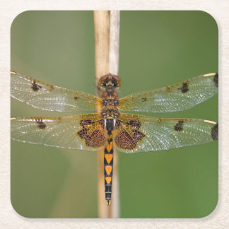 Calico Pennant Square Paper Coaster