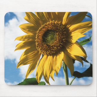 California, A Mammoth Sunflower (Helianthus) 2 Mouse Pad
