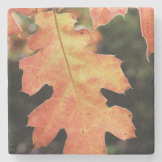 California, An autumn colored Oak leaf Stone Coaster