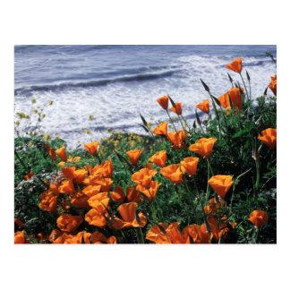 California, Big Sur Coast, California Poppy Postcard
