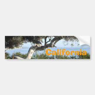 California coastal tree bumper sticker