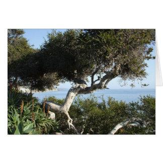 California coastal tree card (h)