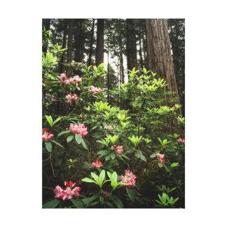 California, Del Norte Coast Redwoods State Park Canvas Print