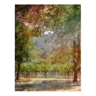 California Dream Vineyard Postcard