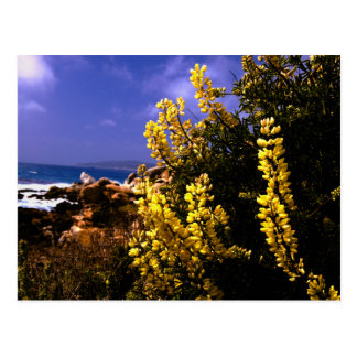 California Floral Coast Postcard