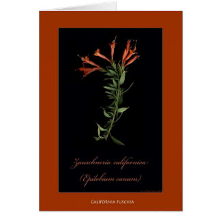 California Fuschia Botanical Print Cards