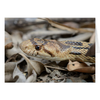 California Gopher Snake Greeting Card