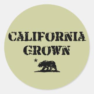California Grown Bear Classic Round Sticker
