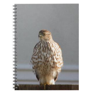 California Hawk notebook