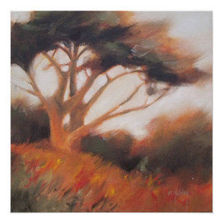 California Monterey Cypress Trees Poster