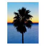 California Palm Tree and Pacific Ocean Sunset Postcards
