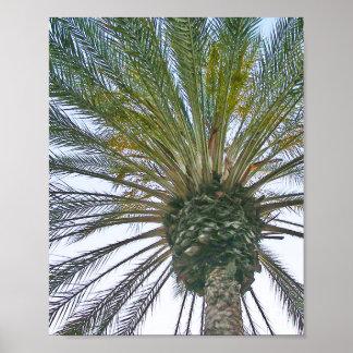 California Palm Tree Poster