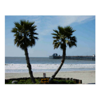 CALIFORNIA PALMS POSTCARD
