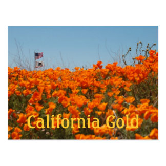 California Poppies And American Flag Post Card
