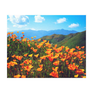 California poppies covering a hillside gallery wrap canvas