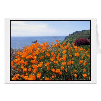 California poppies growing above Trinidad Bay Card