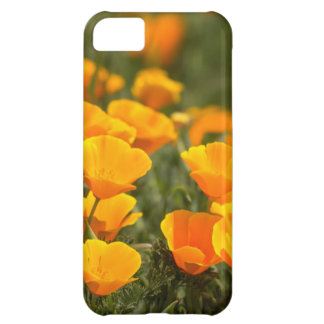 California poppies, Montana de Oro State Park iPhone 5C Cover